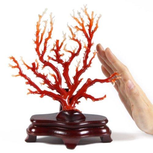 天然珊瑚(AKA) 原枝賞件比例尺